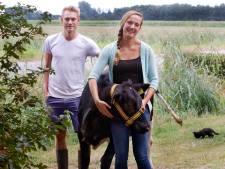 Knuffelen met koe 'Pikachu' op de zorgboerderij in Etten-Leur