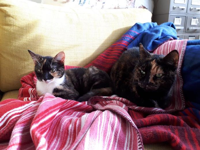 Maarten Bel heeft zelf ook twee katten: Willie en Fien.