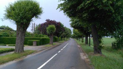 """Burgemeester legt kritiek van Groen over geplande kaalslag van 101 bomen naast zich neer: """"Ofwel zorg je voor de bomen, ofwel voor de veiligheid van voetgangers en fietsers"""""""