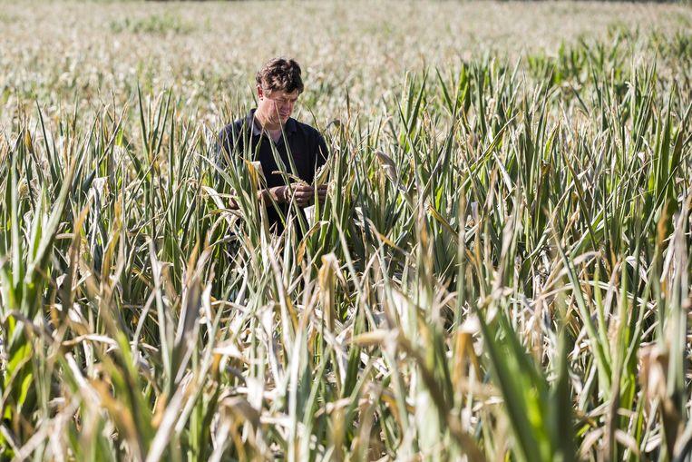 Land- en tuinbouwers met percelen in Hasselt kunnen tot vrijdag 30 augustus bij de stad Hasselt melding maken van geleden schade.
