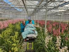 Laatste wens van vrouw (61) in vervulling in Luttelgeest: nog één keer genieten van de orchideeën