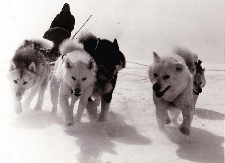 De hondenslede, een toen gebruikelijk vervoersmiddel.