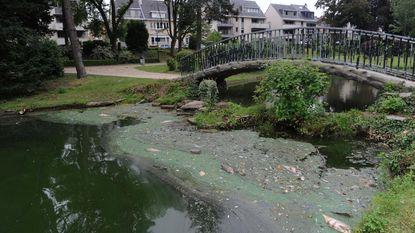 Overblijvende vissen liggen dood in gemeentelijke vijver