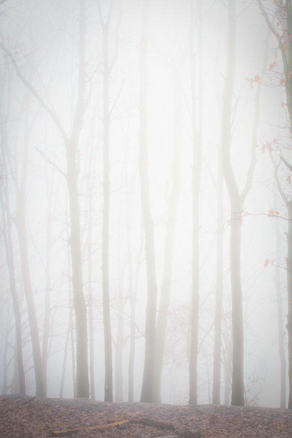 Mist in Limburg  zoutleeuw