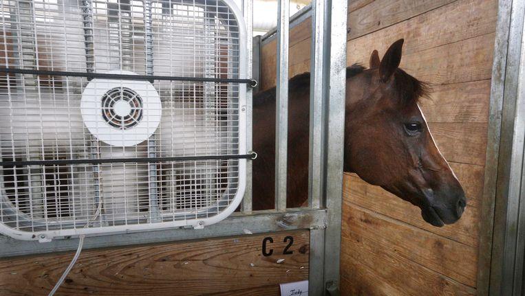 Een paard in Illinois wordt koel gehouden met een ventilator.