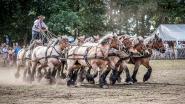 Stuntteam Gipsy Horses op 22ste Trekpaardenhappening