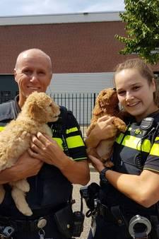Puppy's rechtstreeks uit kofferbak verkocht in Rijen? Het zat net iets anders…
