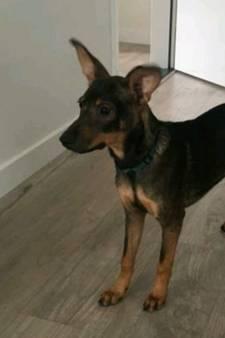 Hondje Max na vijf zenuwslopende dagen herenigd met bazin