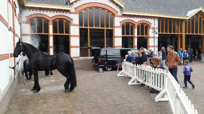 Het publiek kijkt toe hoe een paard een nieuwe hoef krijgt aangemeten.