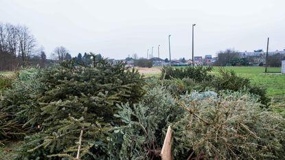Groen pleit voor kerstboomverhakseling