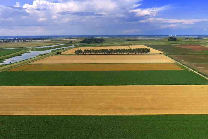 De Noordwaard is nu een lappendeken van rijpend graan, groene akkers met bietenloof en bloeiende aardappelvelden.