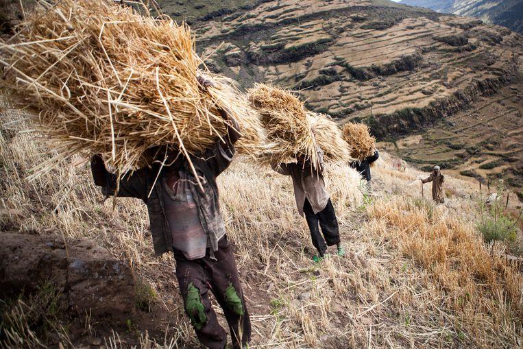 Boeren in het Simien Gebergte in het noorden van Ethiopië. Beeld Julius Schrank
