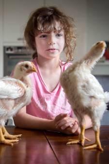 Loïs (7) en Tijmen (10) eten straks hun eigen kip op