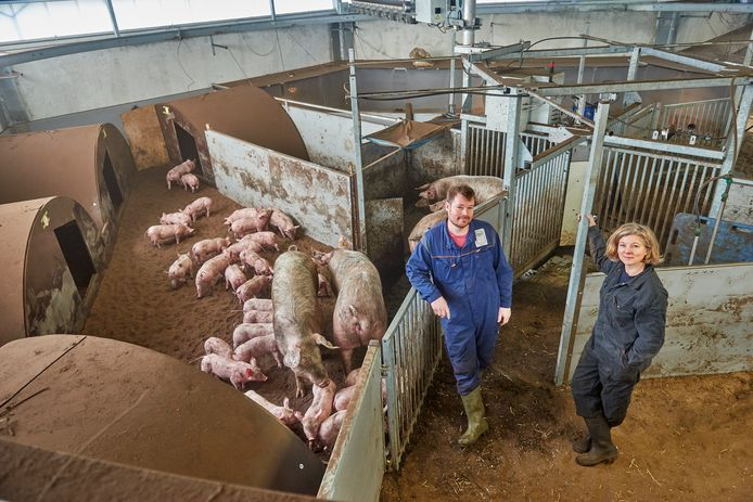 Varkenshouder Ivo Bekkers en wetenschapper Liesbeth Bolhuis in de nieuwe stal.