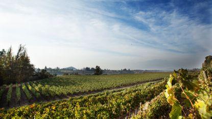 Chillen met Chileense witte wijn