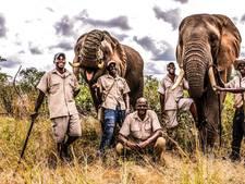 Olifant vertrappelt trainer bij toeristenattractie Zimbabwe