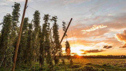 Overleg tussen hopsector en minister over extra reglementering