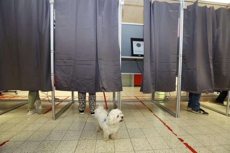 Deze maltezer had dan wel geen zin om te stemmen, maar hoe scoorden de Ardooise kandidaten?