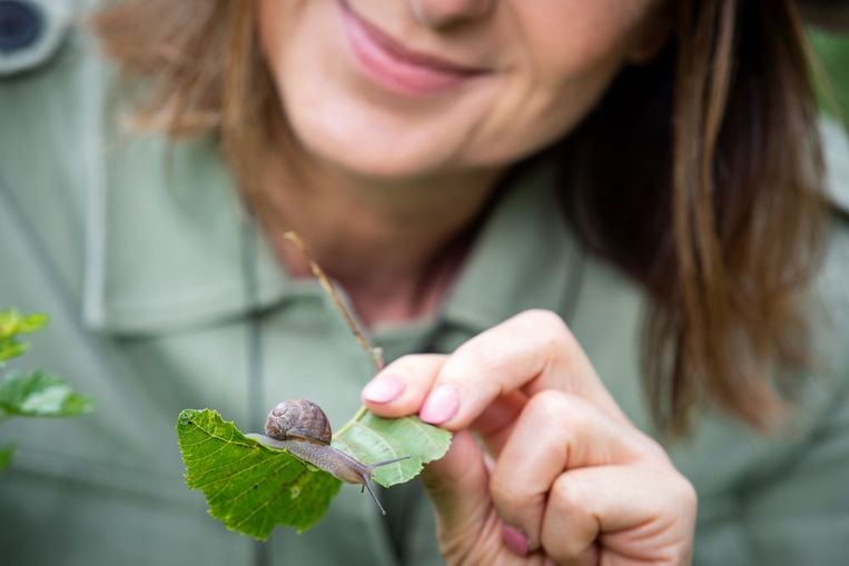 Slakken ruimen veel dood planten- en dierenmateriaal op