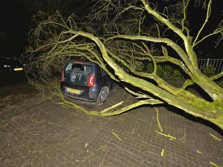 90 meldingen van stormschade in de regio: één gewonde door omgevallen boom