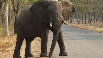Olifant plet Duitse toeriste (49) in Zimbabwe