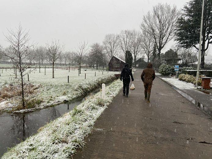 De eerste sneeuw van het jaar, vanmorgen in de Assebroekse Meersen in Brugge.