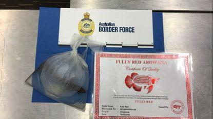 Australische douane vindt levende vis in zakje rond nek van passagier