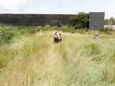 Schaapskooi Noord in Saeftinghe beperkt open deze zomer