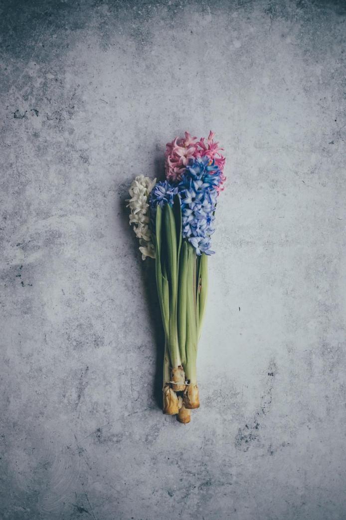 De geur van de hyacint is geliefd.