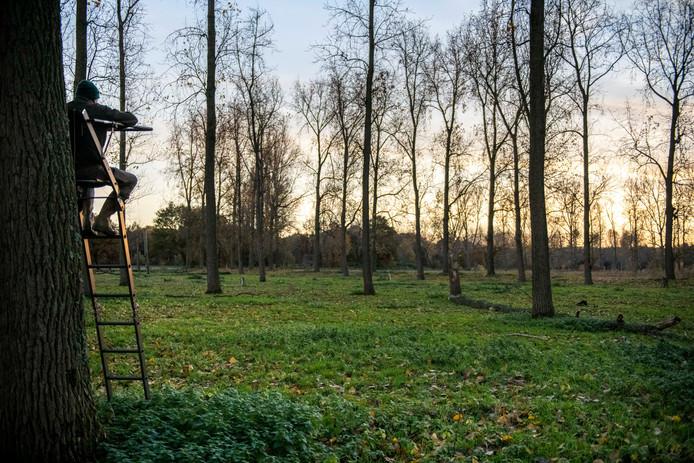 De jager die de twee edelherten in Zeeuws-Vlaanderen gaat afschieten demonstreert zijn hoogzit.