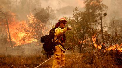 """Biologen in Californië: """"Blus bosbranden niet"""""""