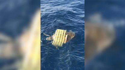 Vissers redden zeeschildpad uit plastic mand