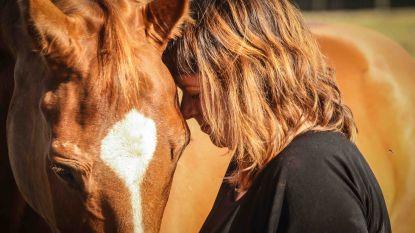 Uitgetest: ontstressen met paarden
