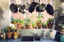 Tomaten, komkommers, courgettes en paprika's kan je in potten kweken, maar dat is voor gevorderden.