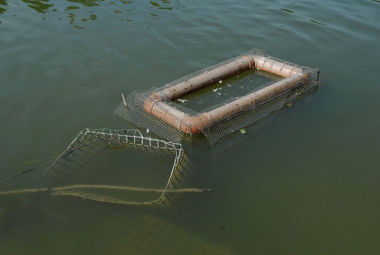 Met deze val moeten de schildpadden uit de vijvers gehaald worden.