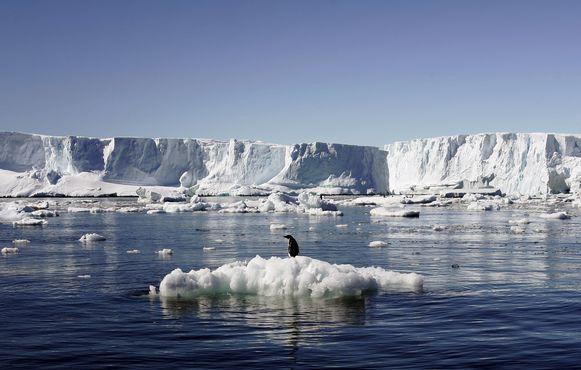 Een pinguïn op een ijsschots bij de Franse basis Dumont d'Urville op Oost-Antarctica.
