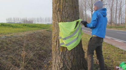 In Alveringem kregen ook bomen een geel hesje