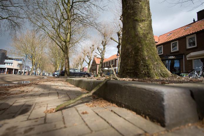 De Gendtse Dorpstraat, met beeldbepalende platanenrij.