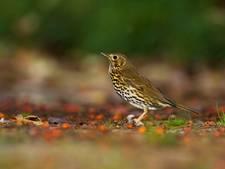 Minicursus in Ermelo om vogels te herkennen
