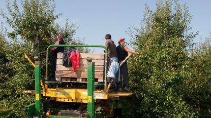 Fruit plukken in bubbel en dagelijks temperatuur meten: ook seizoensarbeiders horen zich aan regels te houden