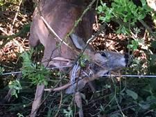 Dierenvriend redt 'Bambi' in nood bij Kloosterhaar