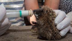 Vannacht duiken de temperaturen opnieuw onder het vriespunt: zo zorg je voor de diertjes in je tuin