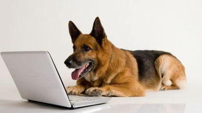 Hond krijgt werkloosheidsuitkering