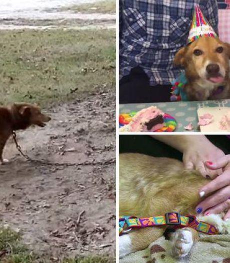 Après douze ans de souffrance, cette chienne a fini sa vie en beauté