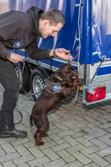 Dit schattige hondje is het nieuwste wapen tegen apensmokkel