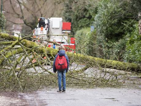 Terugblik: Storm velt bomen in regio