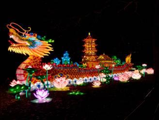 Gitzwarte zomer voor Zoo en Planckendael, maar in kerstperiode wél gloednieuwe lichtfestivals rond dino's en Alice in Wonderland