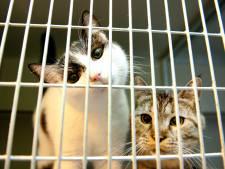 Rotterdam krijgt eindelijk weer een dierenasiel