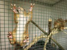 PVV: 'Brabant zelf mede-verantwoordelijk voor toename zieke en gewonde dieren'