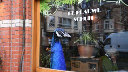De Blauwe Schuit heropent op nieuwe locatie aan het Mathieu de Layensplein